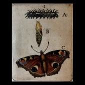 GOEDAERT Jan - Metamorphosis Naturalis